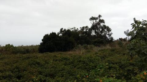 Bolsa de tierras del Nordeste de Tenerife. Finca San Isidro 1