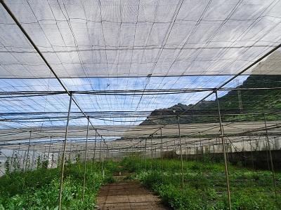 Estado de la malla del invernadero